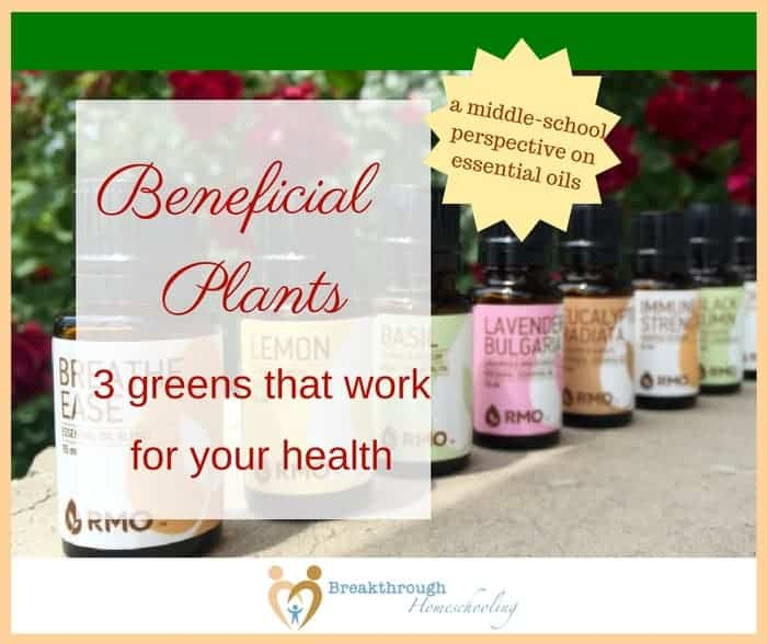 Beneficial Plants: 3 greens that work for your health - I didn't realize how aware my daughter was of our family's essential oil use until she wrote this paper as a school assignment!