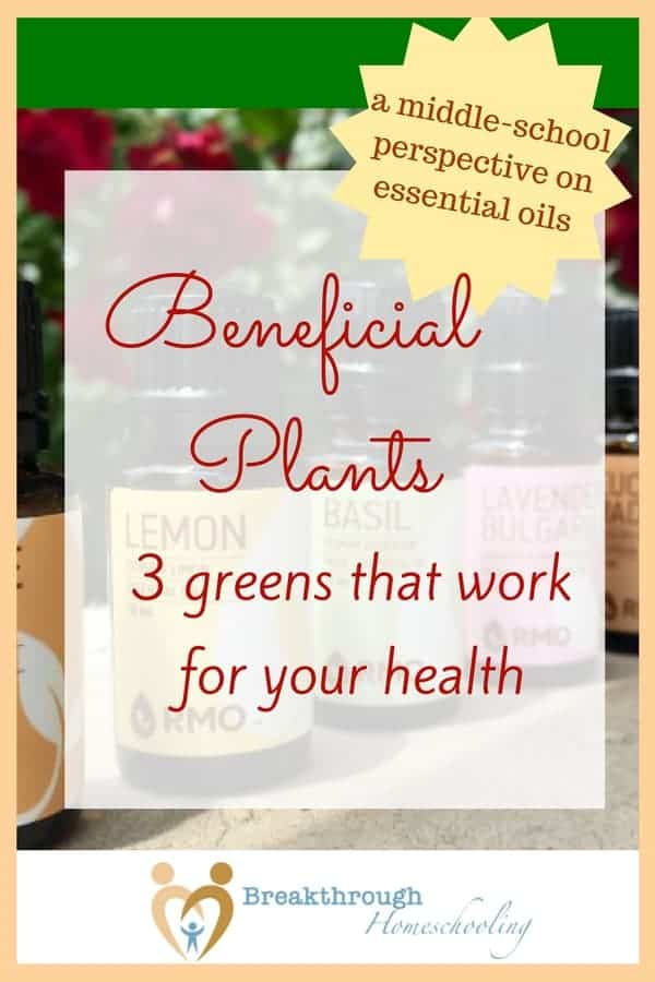Beneficial Plants: 3 greens that work for your health - I didn't realize how aware my daughter was of our family's essential oil use until she wrote this paper on three plants used in essential oils as a school assignment!